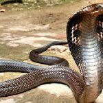Tổng hợp con số may mắn trong giấc mơ thấy rắn