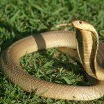 Nằm mơ thấy con rắn nên đánh con loto nào chuẩn nhất