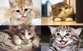 Mơ thấy mèo tổng hợp ý nghĩa giấc mơ