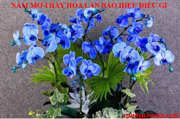 Nằm mơ thấy hoa lan báo hiệu điềm gì?
