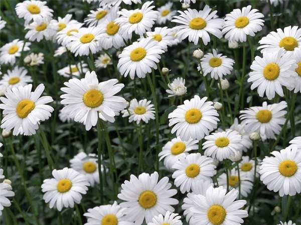 Giải mã ý nghĩa giấc mơ thấy hoa