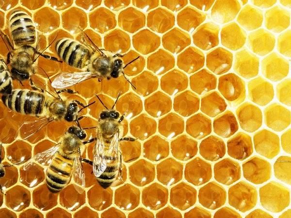 Nằm mơ thấy uống mật ong là điềm gì, đánh con lô đề nào dễ trúng?